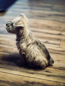 Hond vlooien houten vloer