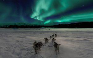 noorderlicht husky hond