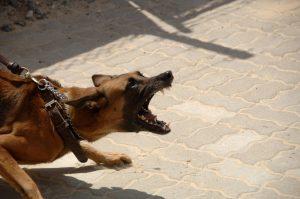 sterilisatie castratie hond