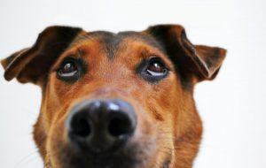 waarom bijten honden elkaar in de nek