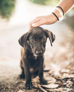 een goede africhting van de pup is erg belangrijk
