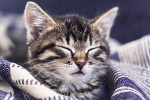 waarom slapen katten zoveel