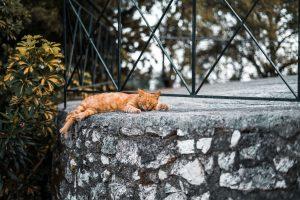 Buiten slapen kat