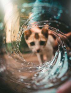 sommige katten houden van water