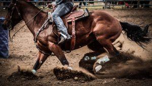 waarom is paardrijden een sport