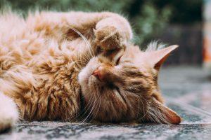 kat sproeien afleren