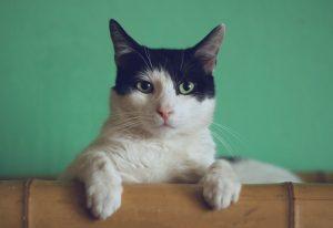 kattenmensen