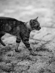 katten sproeien