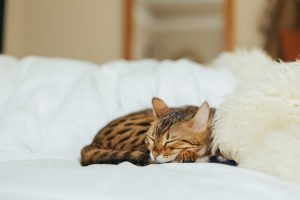 katten kneden