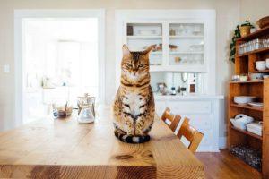 hoeveel moet een kat eten