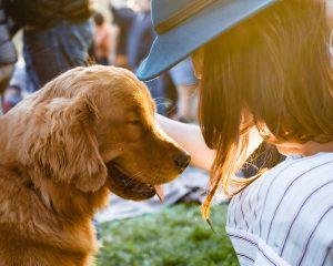 Honden zijn erg aanhankelijk