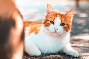 Kat sproeit in huis