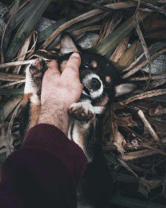 puppy speelt met baasje