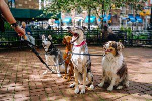 Verlatingsangst komt bij alle verschillende hondenrassen voor