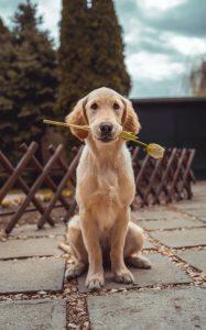wat mag een hond aan groenten eten