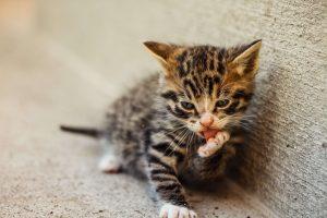 Kitten socialiseren