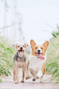 Honden behoren tot de carnivoren
