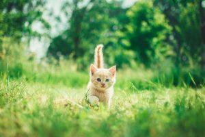 Kitten buiten