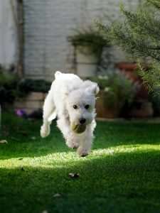 Giftige producten voor honden