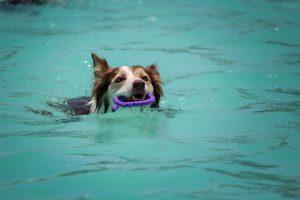 Zwemmen met hitte is een goed alternatief
