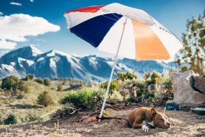 Hond onder parasol