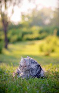 Ook is het belangrijk dat de kitten naar buiten gaat