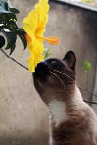 Kat met plant