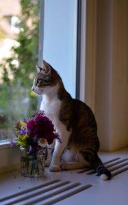 Kat met boeket bloemen