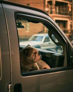 kunnen honden wagenziek zijn