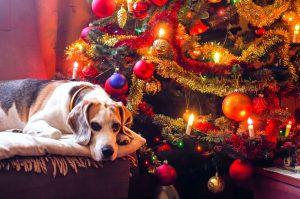 huisdieren en kerst
