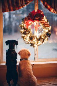 huisdier kerstboom