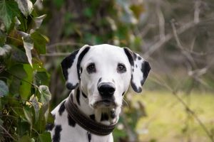 mooiste hondenrassen