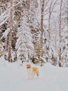 hond eet sneeuw